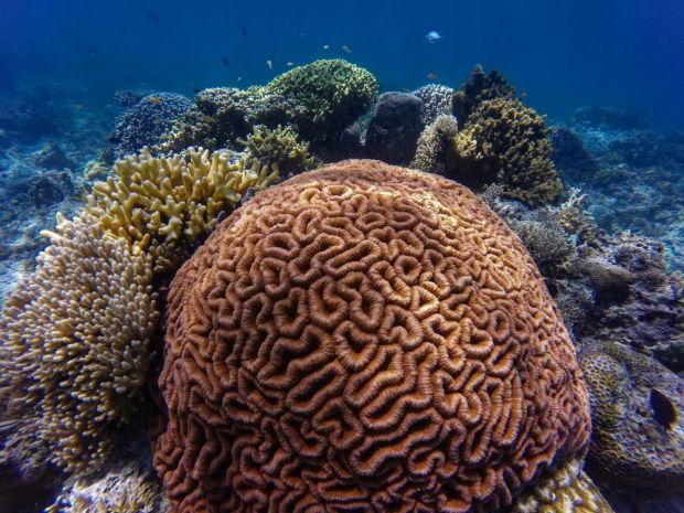 Avertisment fără precedent! Marea Barieră de Corali riscă să dispară în doar câțiva ani