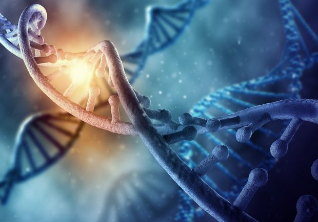 Ce contează mai mult pentru o viață lungă: genetica sau stilul de viață? Răspunsul oamenilor de știință