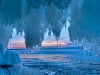 Un animal a supraviețuit timp de 24.000 de ani în solul înghețat din Siberia. După decongelare, a fost capabil și de reproducere