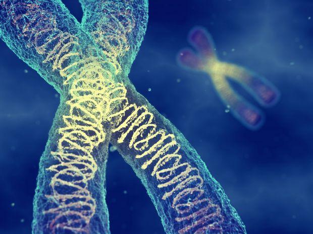 Premieră istorică. Pentru prima dată a fost măsurată masa cromozomului uman