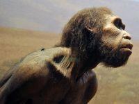 Un craniu descoperit în China ar putea rescrie istoria omenirii. Pare să fie o nouă specie umană