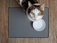 Experimentul care dezvăluie cum preferă pisica ta să mânânce